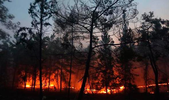 שריפה בלטרון, צילום: גיל יוחנן
