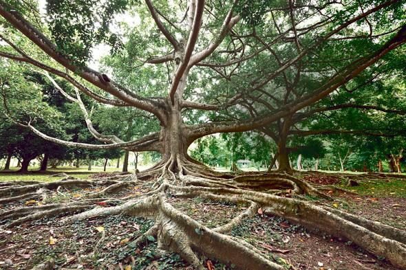 """חורש טרופי בסרי לנקה. """"עצים הם מאוד חברתיים, יש להם משפחות וקהילות"""""""