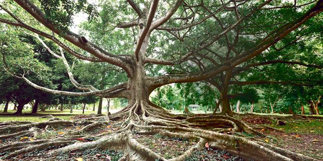 העצים מחבקים את עצמם
