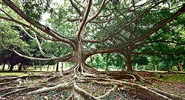מוסף שבועי 24.11.16 עץ עצים שורשים, צילום: שאטרסטוק