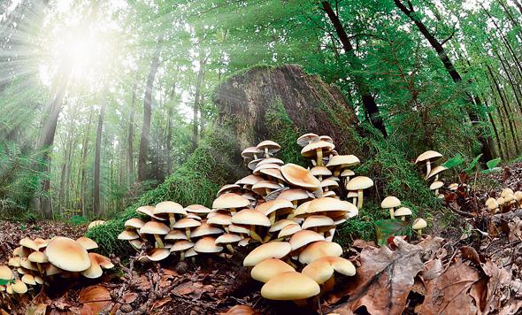 פטריות, צילום: שאטרסטוק