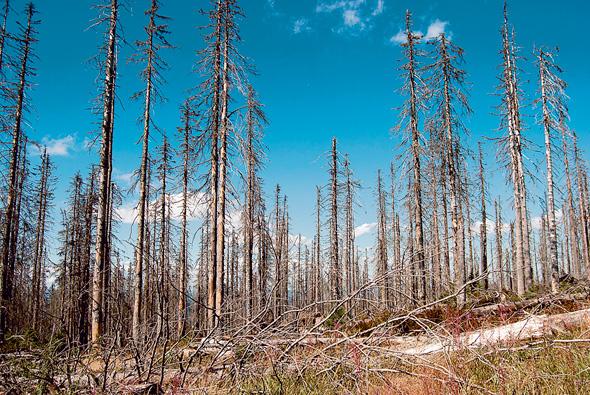 עצים ביערות שונים בעולם, צילום: שאטרסטוק