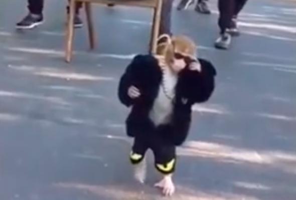 קוף עם אטיטיוד