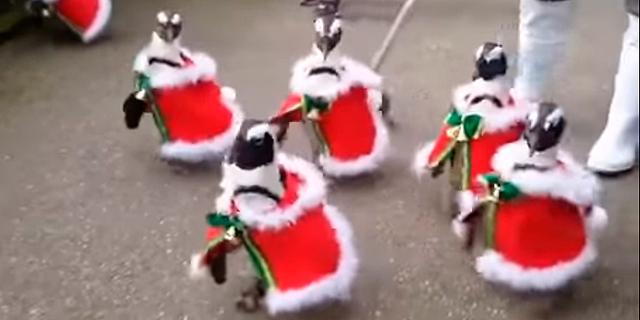 הפינגווינים באים והם מביאים מתנות