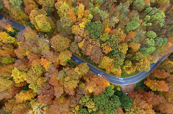 יער בגרמניה, צילום: גטי אימג
