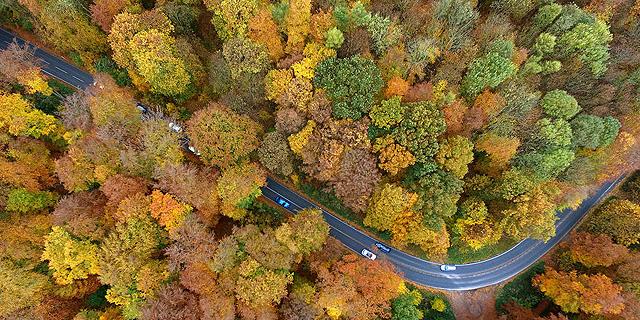 נלחמת במשבר האקלים: גרמניה תשקיע 800 מיליון יורו בשיקום יערות