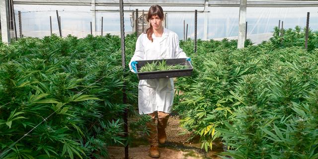 Israel's Cannabis Fever: Six Stories From Israel's Growing Medical Marijuana Hub