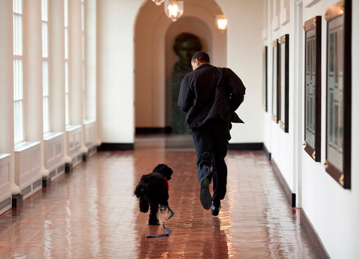 אפריל 2009. הנשיא רץ במסדרונות הבית הלבן עם בו, הכלב שהעניק הסנטור טד קנדי במתנה לבנות הנשיא סשה ומליה