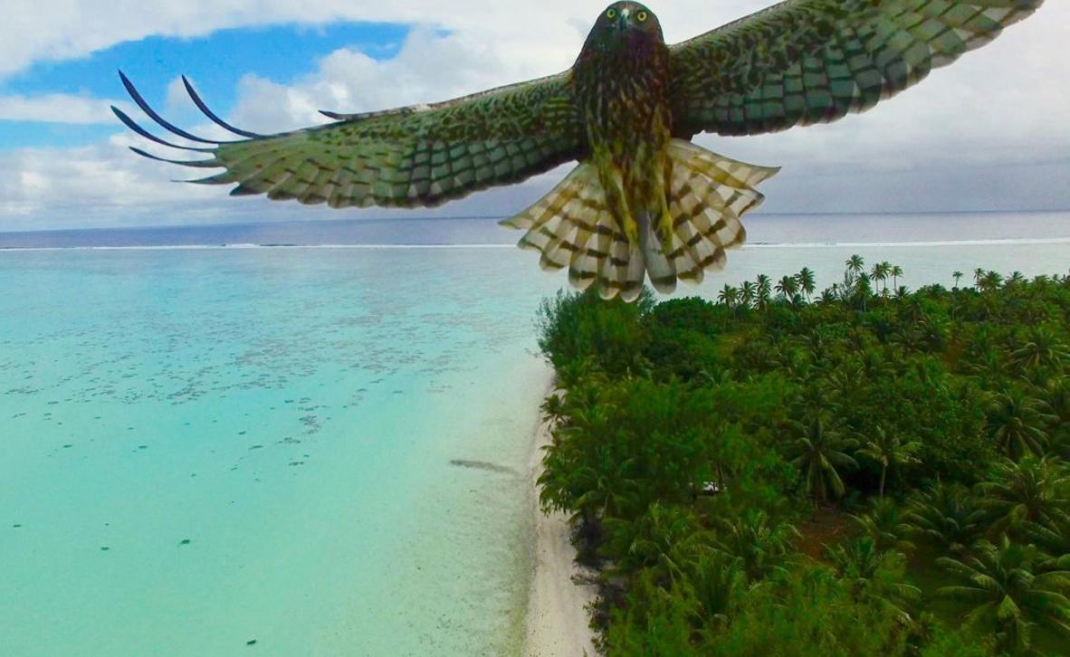 צילום: Actua Drone