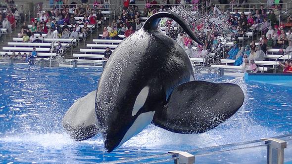 ה לווייתן טיליקום מת סיוורלד סי וורלד, צילום מסך: Youtube