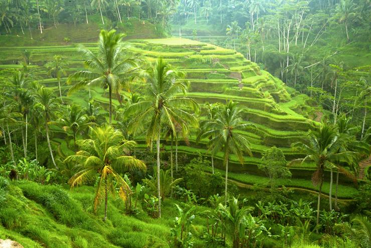 אינדונזיה, צילום: אימג