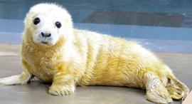 של מי יותר חמוד, צילום: twitter_national zoo