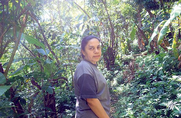 ורוניקה, מורת הדרך שלי בג'ונגל