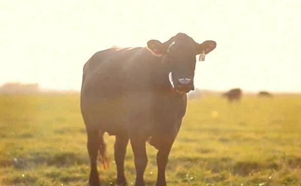 """מתוך """"Cowspiracy"""". אנשים בברזיל שיצאו נגד תעשיית הבשר מצאו את מותם"""