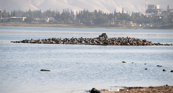 האי בכנרת, צילום: אפי שריר