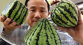 אבטיח לב פירמידה מרובע פירות יפן, צילום: גטי אימג'ס