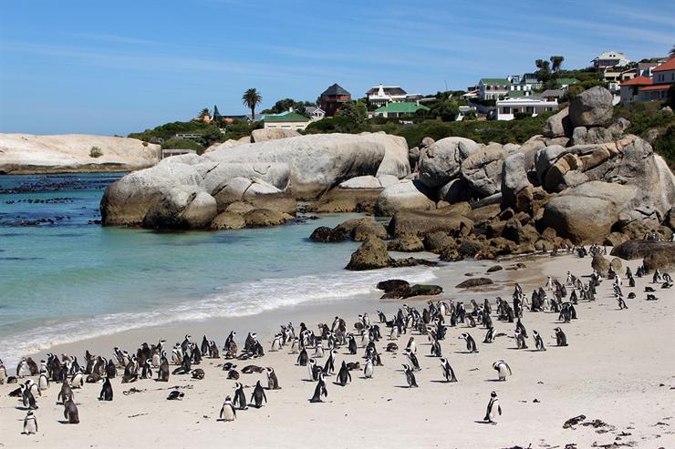 קייפטאון, דרום אפריקה. כמה עולה לקנות כאן קרם הגנה?, צילום: asthebirdfliesblog