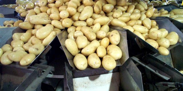פפסיקו תובעת חקלאים הודים - בגלל תפוחי אדמה