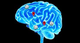 מוח וויז ניווט