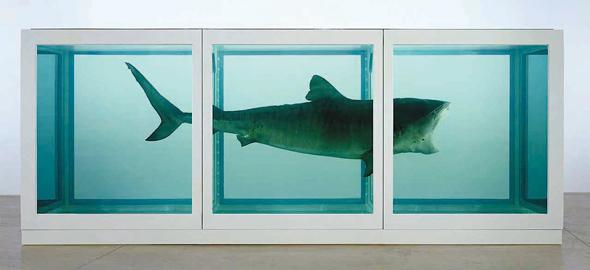"""הכריש המשומר בפורמלין של האמן דמיאן הירסט שאותו רכש כהן תמורת 8 מיליון דולר. גם """"החלום"""" של פיקאסו באוסף"""