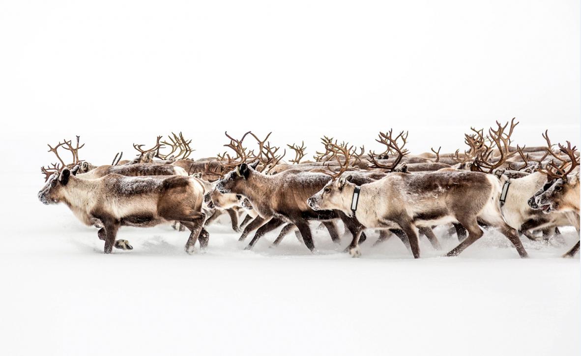 צילום: Adam Cunningham-White / National Geographic Travel Photographer of the Year