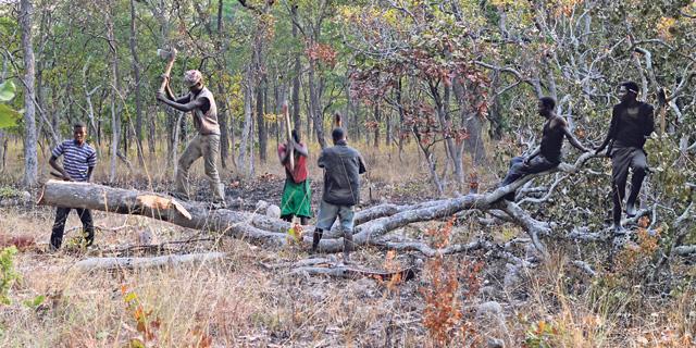 כשעץ נופל ביער אפריקאי, האם יש סיני ששומע?