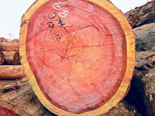 בול של רוזווד עם הליבה האדומה במודעה למכירת עצים בעליבאבא. אפילו הספקולנטים הגיעו