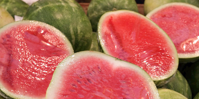 Scientists on a Mission to Save Squashed Israeli Watermelon