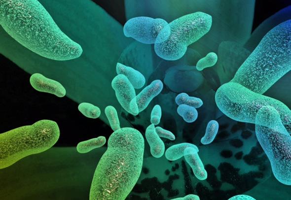 טיפול מבוסס בקטריות. אילוסטרציה, צילום: BiomX