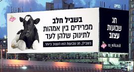 שלט שיוצב ב איילון קמפיין טבעוני נגד שבועות, צילום: רועי שפרניק