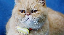 מחשוב לביש לחתול, צילום: רויטרס