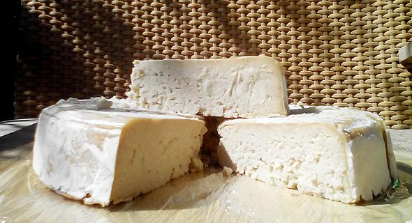 גבינת קממבר טבעונית של טבע האדם