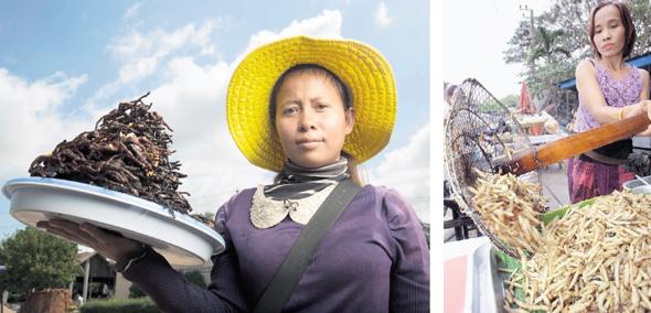 """תולעי במבוק בתאילנד (מימין) וטרנטולות מטוגנות בקמבודיה. """"הכוורת היא חלופה בריאה לגידול המסורתי"""""""