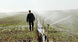 חקלאות השקייה מים, צילום: מאיר אזולאי