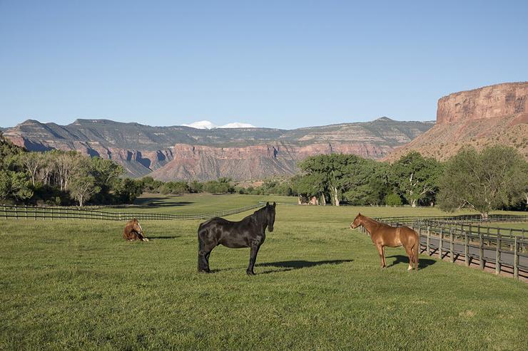 סוסים בחווה
