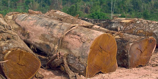 קרטל גיזום העצים: 17 מעורבים הורשעו בתיאום מחירים מול חברת החשמל ועיריות
