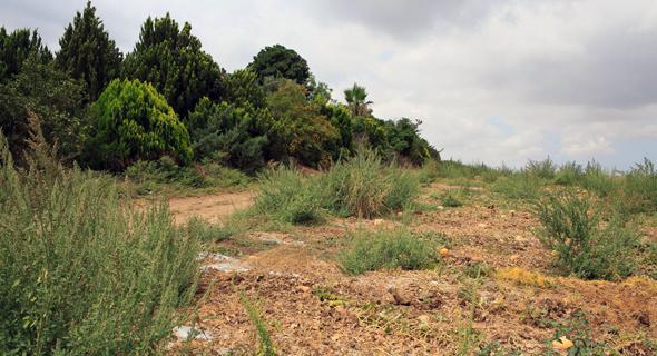 הקרקע החקלאית במושב פדיה. במקום דירה תוכלו לגדל מלפפונים