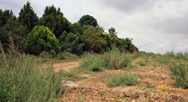הקרקע החקלאית במושב פדיה, צילום: ענר גרין