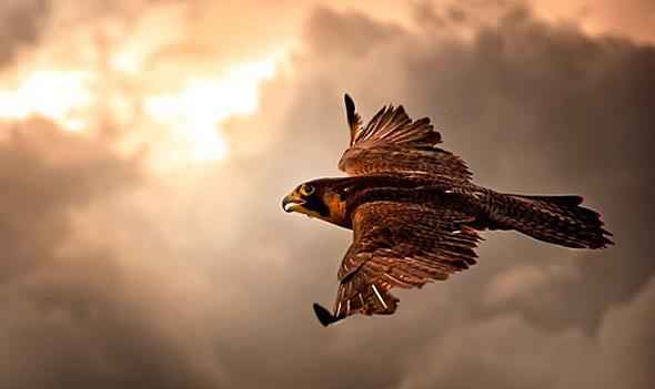 הכנף מתעקלת מעלה. על מה ולמה?