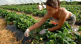 חקלאות. מנועי הכסף, צילום: David Wootton/Alamy