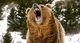 בורסה שוק דובי ירידות שערים מניות דב, צילום: שאטרסטוק