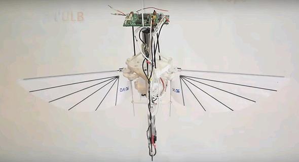 הקוליברי, צילום: Youtube