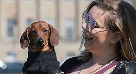 כלב נקניק מס כלבים מסים מוזרים, צילום: גטי אימג'ס