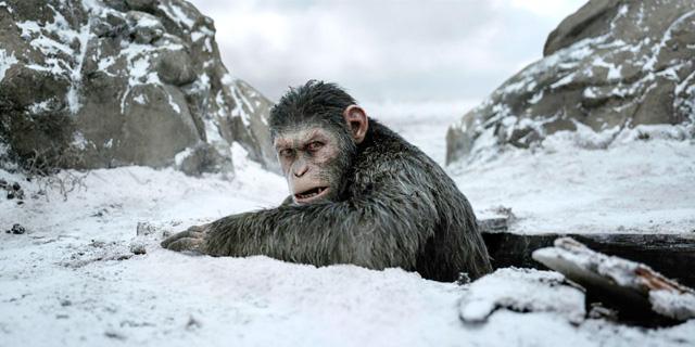 """הסרט """"כוכב הקופים: המלחמה"""" הכוכב של הקיץ"""