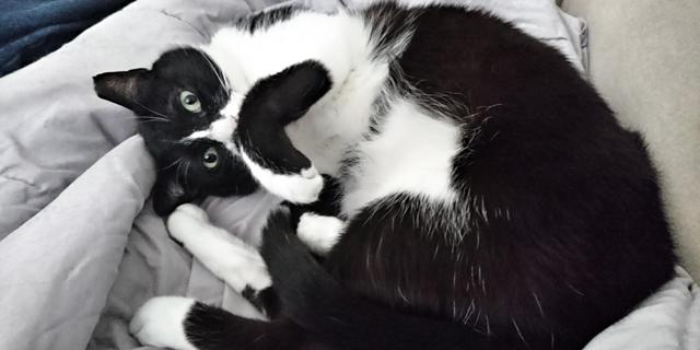 כמו חתול, אבל באפליקציה, צילום: ניצן סדן