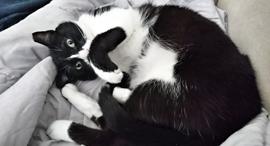 חתול חתולים חיות מחמד, צילום: ניצן סדן