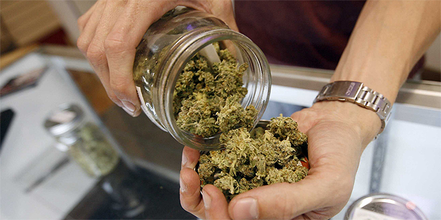 Medical cannabis. Photo: Getty Images