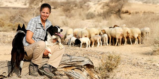 לא רועה ממטר: הישראלית שרוצה להיות אלופת העולם ברעיית כבשים