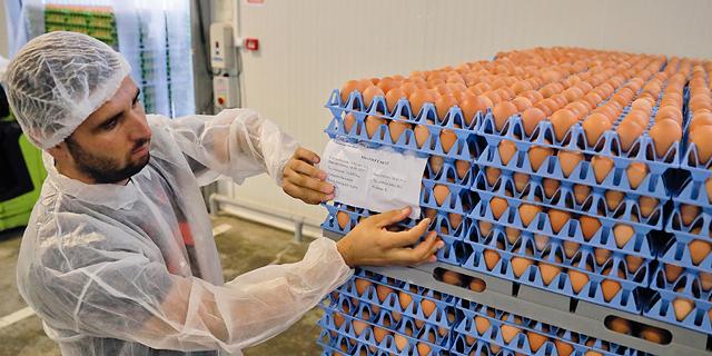 בעקבות זיהום הביצים באירופה: משרד החקלאות מבקש להגדיל את מכסות הייצור