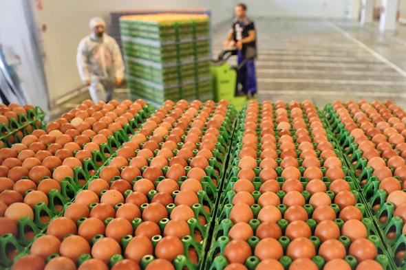 ריקול לאלפי ביצים באירופה, צילום: איי פי